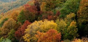Assisi - Parco del Monte Subasio in Autunno