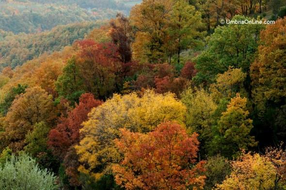 Il Parco del Subasio ad Assisi in autunno