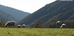 Assisi - Parco del Subasio