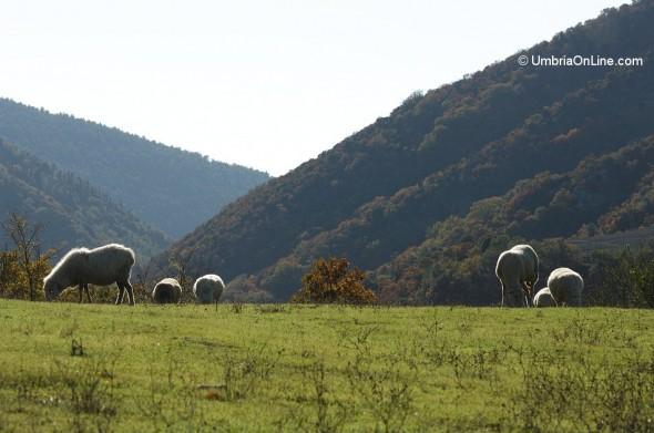 Immagine del Parco del Subasio ad Assisi